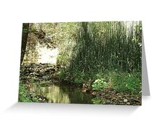 Equisetum at the creek - Clarksville, TN Greeting Card