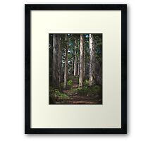 karri forest - pemberton, wa Framed Print
