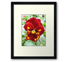 Flammable Pansy Framed Print