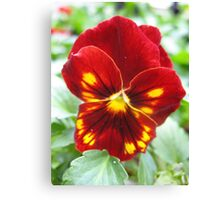 Flammable Pansy Canvas Print
