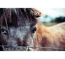 The little horse  Photographic Print