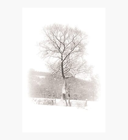 Solitary Tree in Snow Photographic Print