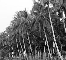 Tamar beach in Palawan by walterericsy