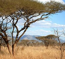 Swazi Bush by Robbie Labanowski