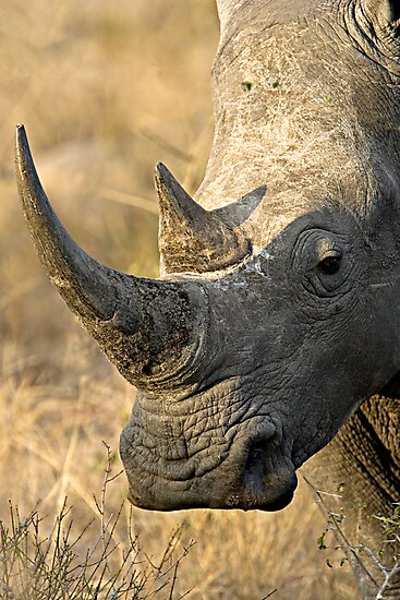 Female Rhino Getting Her Point Across by Michael  Moss