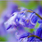 Blue Bells. by CJTill