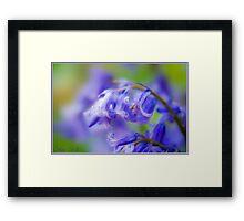 Blue Bells. Framed Print