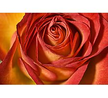 Just a Rose Photographic Print