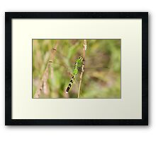 Green Dreams Are Made Of This Framed Print