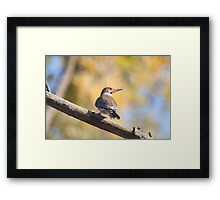 Woody Woodpecker Framed Print