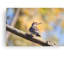 Woody Woodpecker Canvas Print