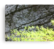 Dark Water Willow Canvas Print