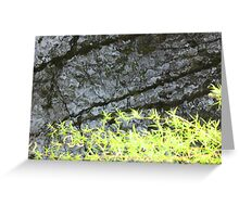 Dark Water Willow Greeting Card