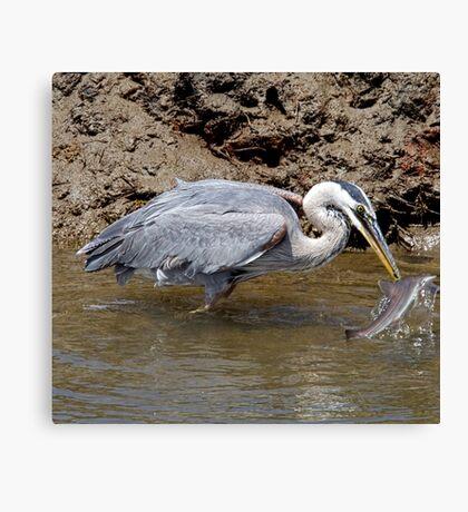 Blue Heron Fishing Canvas Print
