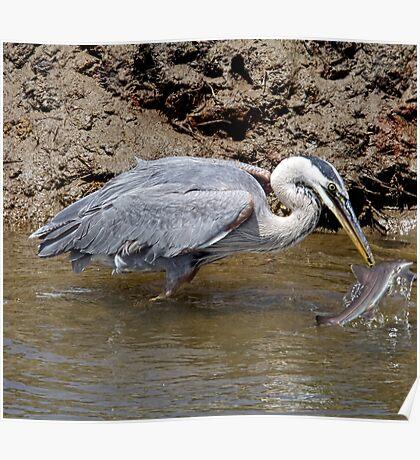 Blue Heron Fishing Poster