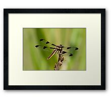 Every Day Is Exactly The Same Framed Print