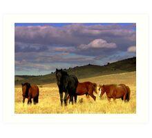 Curious Wild Horse Herd  Art Print