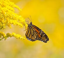 Monarch by EugeJ