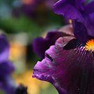 Where Colors Grow by Jennifer Potter