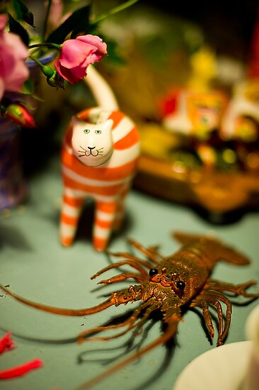 The Cat And The Lobster Were Not To Be Messed With by rorycobbe