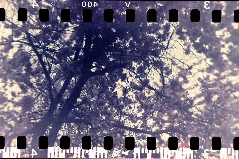 Blossom tree - Leamington Spa, May 2010 by armgw