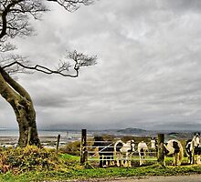 Upland Ponies 2 by Brian Beckett