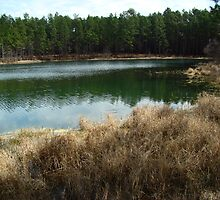 Boykin Springs - The non-camp side by Brandi Beddingfield