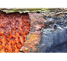 Oxidized infection Photographic Print