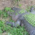 Resting Gator by wanderlust54