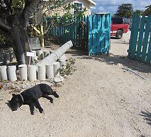 Lazy Carribean Pooch by wanderlust54