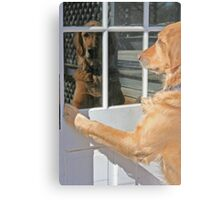 Dog reflection in the window color Metal Print