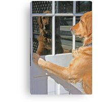 Dog reflection in the window color Canvas Print