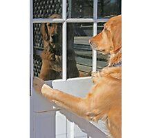 Dog reflection in the window color Photographic Print