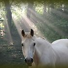 Morning rays by FelicityB