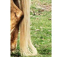 Natural Blond Pony Tail Photographic Print
