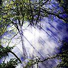 Smoke Though the Trees by Tori Snow
