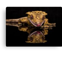 New Caledonian Crested Gecko Canvas Print