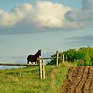 Horse on the Hill by Diane Trummer Sullivan