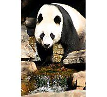 Wang Wang Photographic Print
