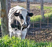1 COW  by Diane Trummer Sullivan