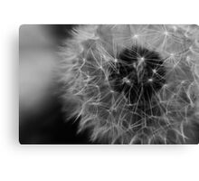 Willow... Canvas Print