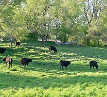 Country COWZ! by Diane Trummer Sullivan