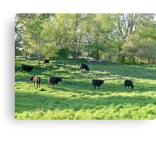 Country COWZ! Canvas Print