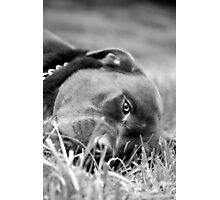Dog 9799 b&w Photographic Print