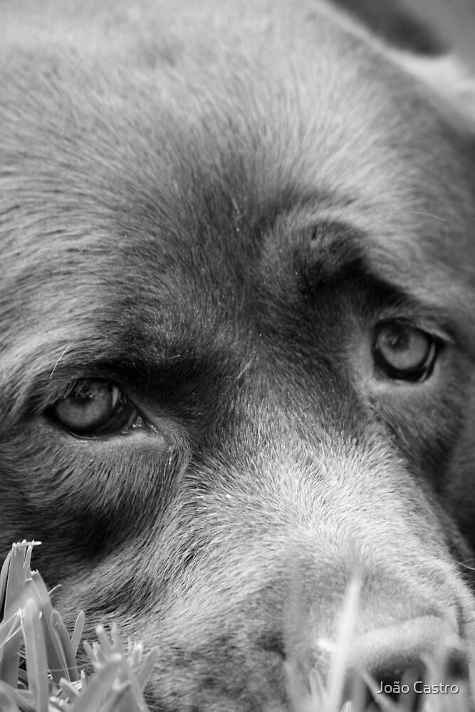 Dog 8788 b&w by João Castro