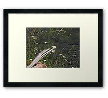 Wild Daisies Near the River Framed Print