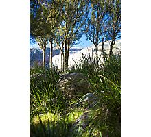 evans crown | native grass | native trees Photographic Print