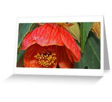Vivid Lantern Greeting Card