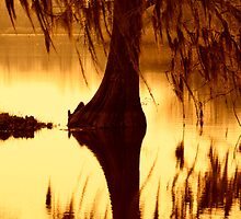 Cypress, Brookgreen Gardens, South Carolina by Jeff Holcombe