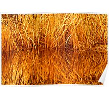 Reeds at Sunset Poster